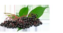 Elderberries from Austria