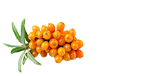 Sea Buckthorn Berries from China