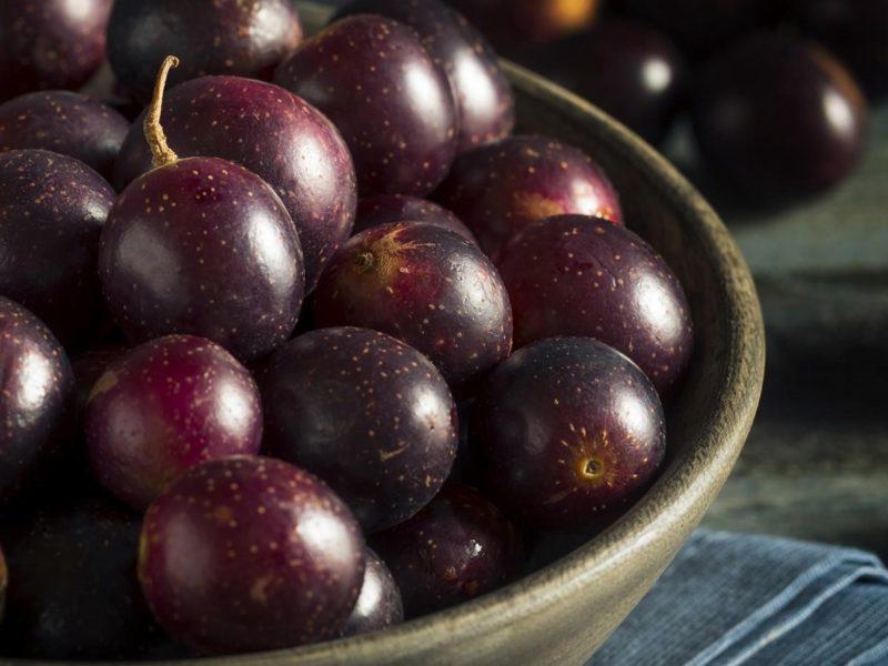 Muscadine grape is high for resveratrol