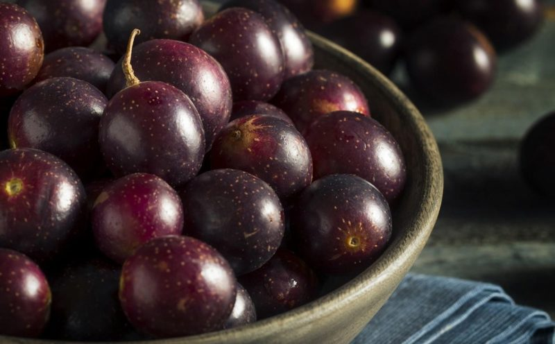 Muscadine grape is high for resveratrol